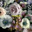 Alpines – Full Bloom